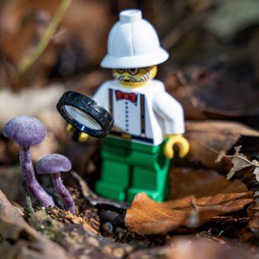 Forschung im Wald